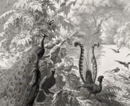 Papier peint panoramique Le Brésil monochrome . 1862